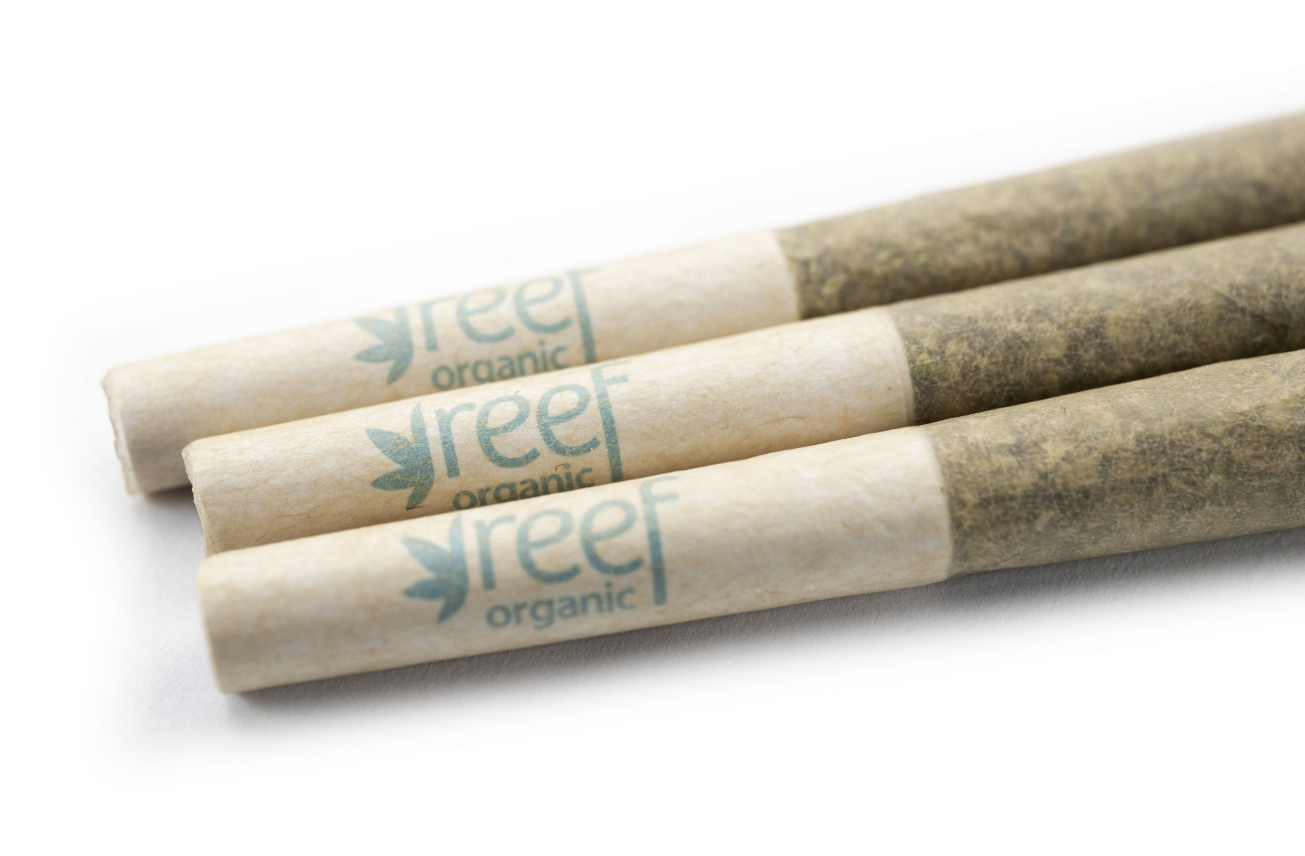 Pre-Roll-Reef-3Filters_artsy-scaled-1