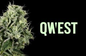 Pressed by Qwest